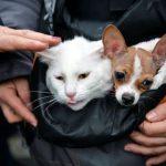 Ученые доказали, что кошки не глупее собак