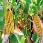 Опрос: граждане ЕС поддерживают использование обычного биотоплива