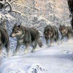 Ученые сделали интересное открытие о древних волках