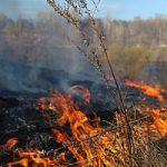 Орелэнерго завершает подготовку к пожароопасному периоду