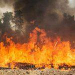 Радиоактивный лес возле «Фукусимы» неделю горит в Японии