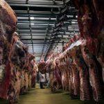 Украина увеличила производство яиц и мяса