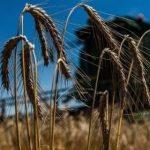 Украина уменьшила экспорт зерновых