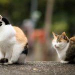 Кошки привязываются к людям не меньше собак