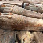 В Египте найден крупный тайник с саркофагами