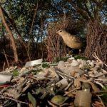 Не тысячу лет: ученые опровергли миф о разложении пластика