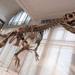 Ученые установили причину гибели динозавров