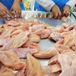 Украина вошла в топ-5 экспортеров курятины в мире