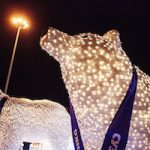 Новогодние белые медведи СУЭНКО отправляются в берлогу