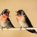 В Индонезии обнаружили 10 новых видов певчих птиц