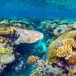 """Впервые найдены """"воскресшие"""" кораллы"""