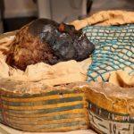 Ученые рассказали о кровавой гибели мумии, захороненной 2600 лет назад