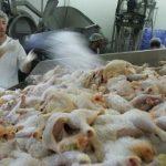 Эксперт оценил потери рынка ЕС для украинских производителей курятины