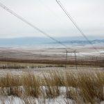В Новосибирской области камыш больше не шумит