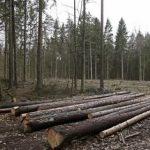 Арбитраж Украины и ЕС по лесу-кругляку перешел в активную фазу