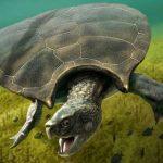 Найдены останки гигантской древней черепахи