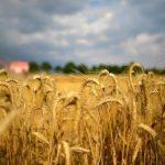 Украина в четыре раза увеличила экспорт зерна за 10 лет