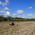 Украинская IT-компания высадила более 2500 деревьев