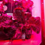Астронавты NASA успешно вырастили съедобные растения в космосе