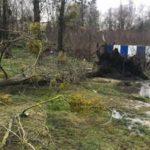 В Гурьевске на девочку упало дерево: ребенок погиб