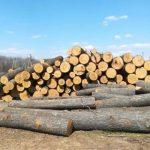На Украине резко возросла незаконная вырубка лесов