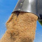 Цена российской пшеницы рекордно подорожала и превысила стоимость нефти