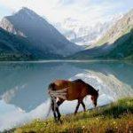 Ученые ИНГГ СО РАН: Горный Алтай смещается к северо-западу на 1 мм в год