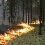 Пожары в зоне отчуждения Чернобыльской АЭС не причинили вреда площадке строительства ЦХОЯТ