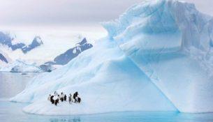 лед айсберг