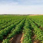 Шотландцы запустят на Украине производство биоупаковки из картофеля