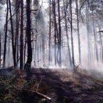 Пожар в Чернобыльской зоне локализован