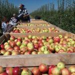 Украина резко сократила экспорт фруктов и овощей