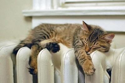 кошка тепло батарея