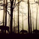 До конца столетия исчезнут 73% живых существ