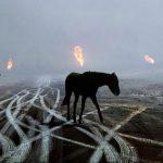 Что общего у нефти с дохлой лошадью?