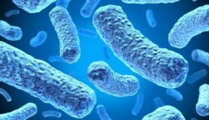 вирус бактерия