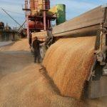 На Украине резко улучшили прогноз по урожаю зерна