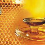 Самарские правильные пчелы получили для призводства меда дополнительное электричество