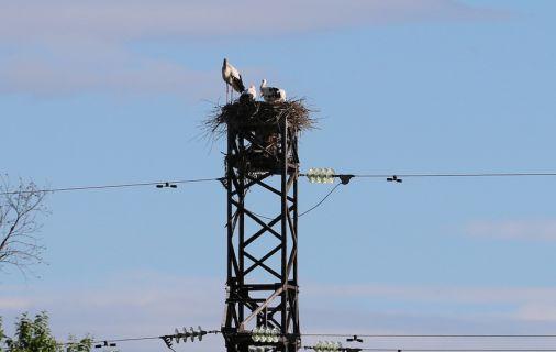 защита от птиц