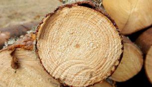 древесина кругляк