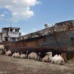 Росгеология оценит углеводородный потенциал акватории Аральского моря в Узбекистане