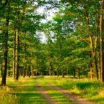 «Зеленый пояс» Новокузнецка планируется увеличить почти вдвое