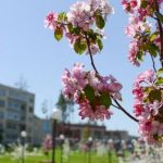 30 000 цветов высадит Белоярская АЭС в городе-спутнике Заречном
