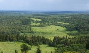 Пермский край лес