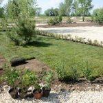 Балаковская АЭС высадит в новом городском ландшафтном парке 4000 деревьев и кустарников