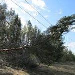 «Облкоммунэнерго»  Свердловской области направит на расчистку территории «лесных» ЛЭП 3,7 млн рублей