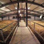 «Россети Ленэнерго» обеспечили электроэнергией сельскохозяйственный комплекс в Ленинградской области