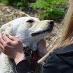 Теплые руки для собаки поможет найти СГК
