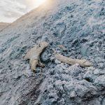 На Новопортовском месторождении обнаружены фрагменты мамонта