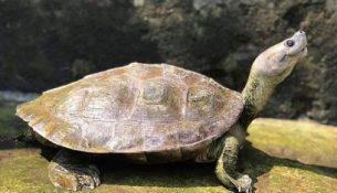 """""""улыбающиеся"""" черепаха"""